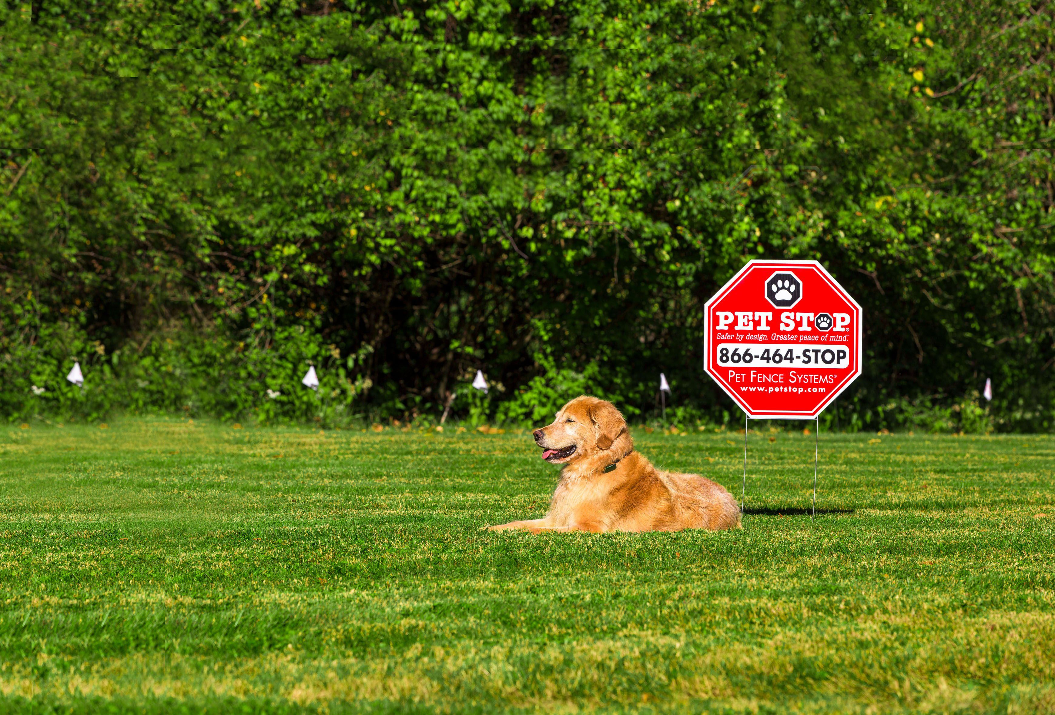 Invisible Dog Fencing In Central Kentucky Hope S Dog Fencing